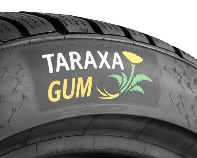 Continental proyecto Taraxagum producción sostenible de neumáticos